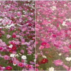 Marumi Soft Fantasy Filter DHG 67 mm